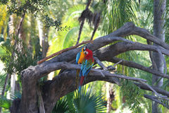Parrots on the tree. In the park Royalty Free Stock Image
