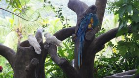 Parrots on tree. Several colored parrots on tree in park, Yanoda, China stock footage