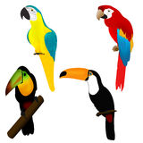 Parrots and tukans, birds of Africa Stock Photography