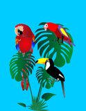 Parrots and tuscan sitting in a rain forest.. Royalty Free Stock Images