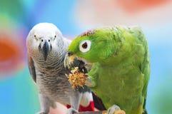Parrots. Stock Images