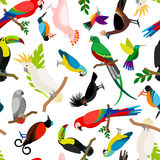 Parrots vector pattern Royalty Free Stock Images