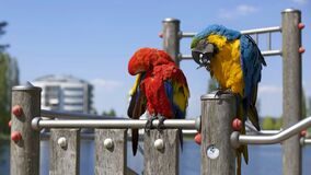 Parrots on waterside perch Royalty Free Stock Photo
