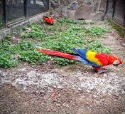 Parrots. In zoo Royalty Free Stock Images