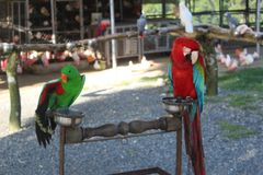 Parrots in the zoo royalty free stock image