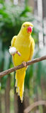 Parrots in the zoo. Stock Images