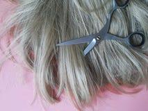 Parrucca di concetto di lavoro di parrucchiere di bellezza del fondo di forbici dei capelli, lavoro di parrucchiere Fotografie Stock Libere da Diritti