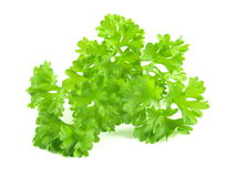 Parsley. A closeup of parsley on white isolated background stock image