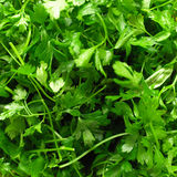 Parsley Stock Images