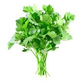 Parsley. stock photo