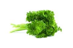 parsley Arkivbilder