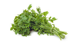 Parsley. Green and fresh parsley Isolated on white background stock photos