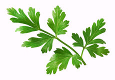 Free Parsley Stock Photos - 16832253