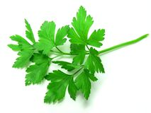 parsley Arkivbilder