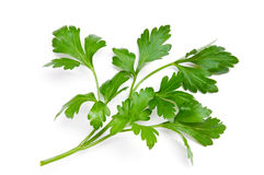 Free Parsley Stock Images - 17416094