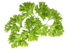 Parsley. Sprig of parsley back-lit. Very short DOF, focus on center of frame Royalty Free Stock Photo