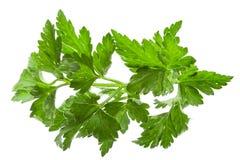 parsley Royaltyfria Bilder