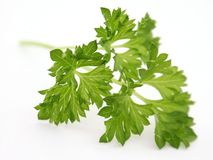 Parsley Arkivfoto