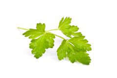 Parsley. A parsley, isolated on white Royalty Free Stock Photo