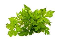 parsley Royaltyfria Foton