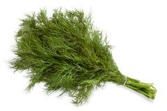 parsley Royaltyfri Bild