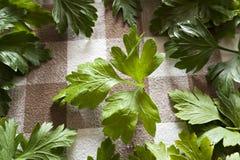 parsley Fotografering för Bildbyråer
