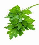 parsley Royaltyfria Bilder