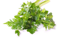 Parsley. Royalty Free Stock Photos