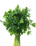 Parsley. Bunch of fresh parsley isolated over white background Stock Photos