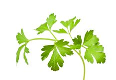 parsley Royaltyfri Fotografi
