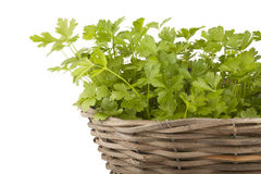 Parsley. On a white background Stock Image