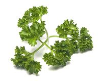 Parsley. Over white macro close-up Stock Photos