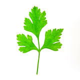 Parsley. Leaf isolated on white Royalty Free Stock Photo