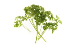 Parsley Stock Image