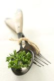 Parsley. Fresh parsley on a spoon, ingredient vegetable use for cooking Royalty Free Stock Photos