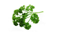 Parsley. Fresh leaf of a parsley isolated on a white background Stock Images
