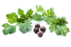 Parsley allspice Royaltyfri Fotografi