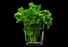 Parsley aromatic herb on black Stock Photography