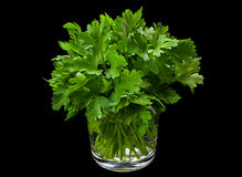 Parsley aromatic herb in glass Stock Image