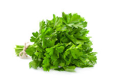 Parsley aromatic herb Stock Photos