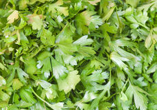 Parsley background Royalty Free Stock Photography