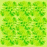 Parsley background pattern Stock Photography