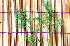 Parsley  on bamboo plate Stock Photography