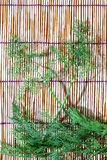Parsley  on bamboo plate Royalty Free Stock Photo
