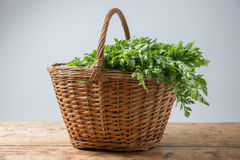Parsley in basket Royalty Free Stock Images