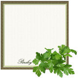 Parsley Border Square Frame. Parsley square border frame with text; white background and copyspace Royalty Free Stock Image