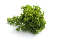 Parsley bouquet Royalty Free Stock Image