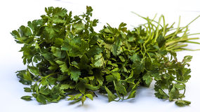 Parsley bouquet Stock Photos