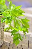 Parsley in braided basket isolated Royalty Free Stock Image