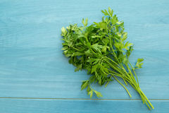 Parsley branch Stock Photo